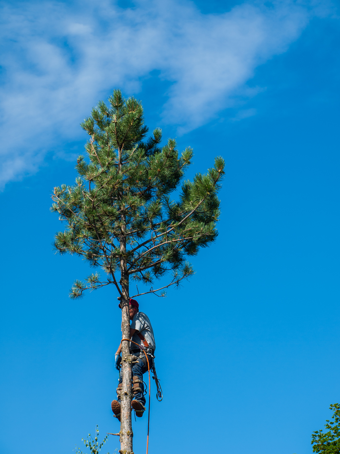 Trädfällningar på Värmdö