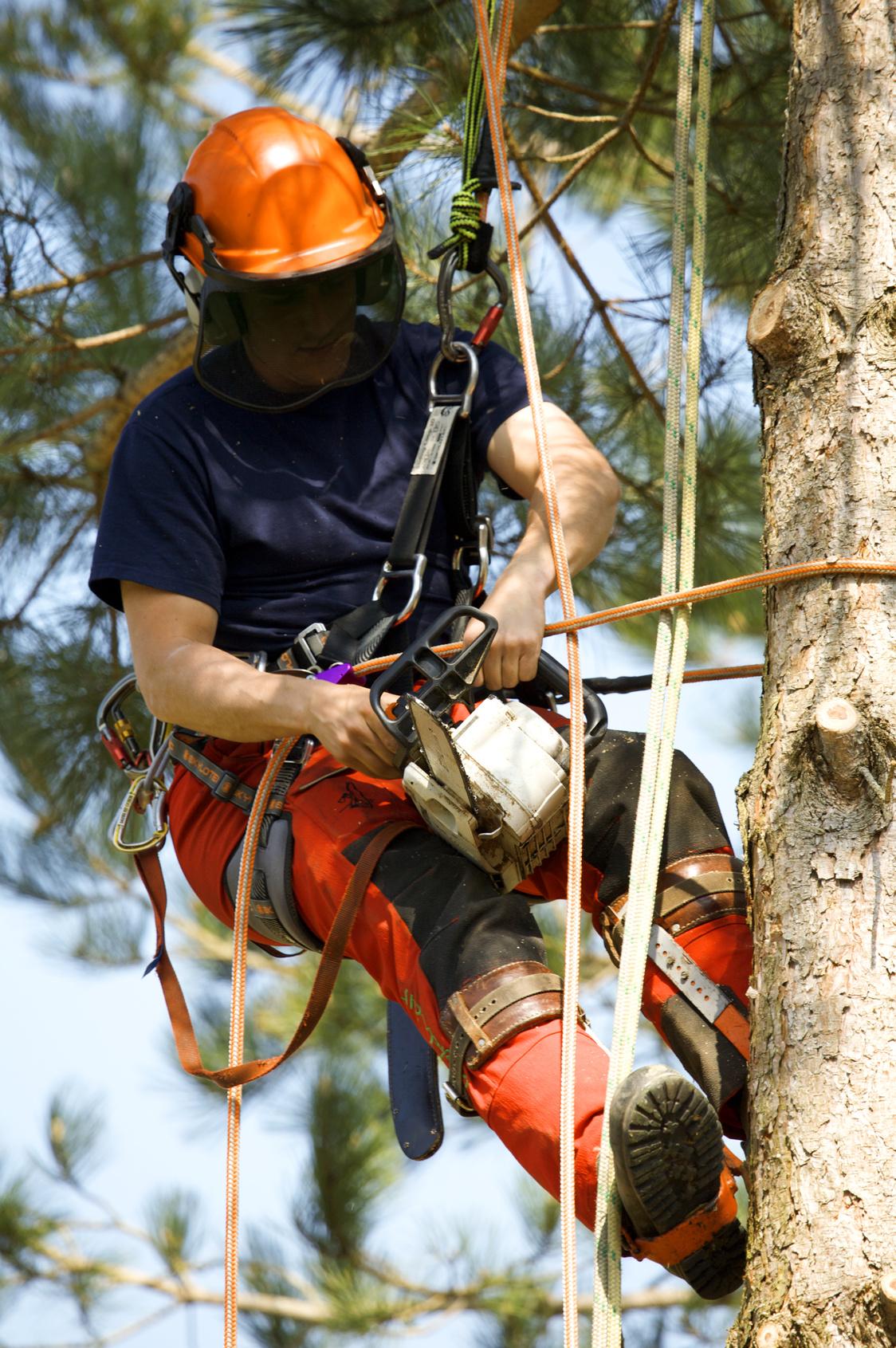 Avancerad trädfällning på Värmdö